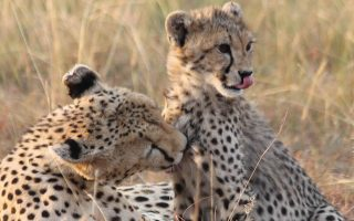 lodging safari